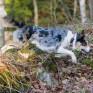 MiniFinder® Atto GPS Tracker till jakthund