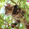 MiniFinder® Atto GPS Tracker till hund / katt