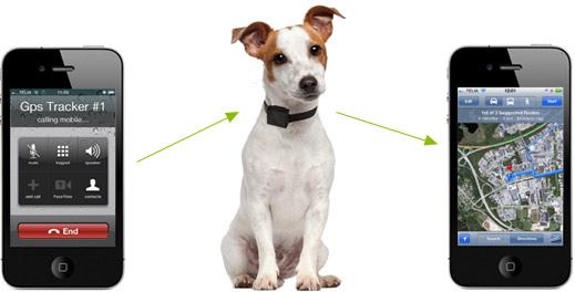 Spåra hunden med en gps tracker guide